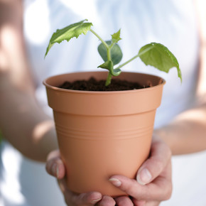 Yetiştirme Saksısı Terra Green Basics