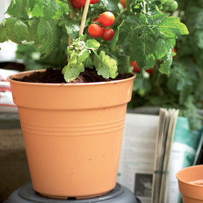 Elho Green Basics Yetiştirme Saksısı Kahve 19 cm