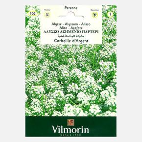 Alisyum (Gümüş Sepet)