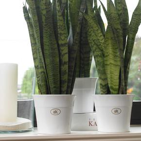 Soendgen Olympiakos Saksı Beyaz 12 cm
