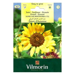 Güne bakan Çiçeği (D'Automne)-Seri 1