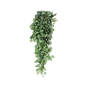 MICA Yapay Sarmaşık Fittonia Yeşil