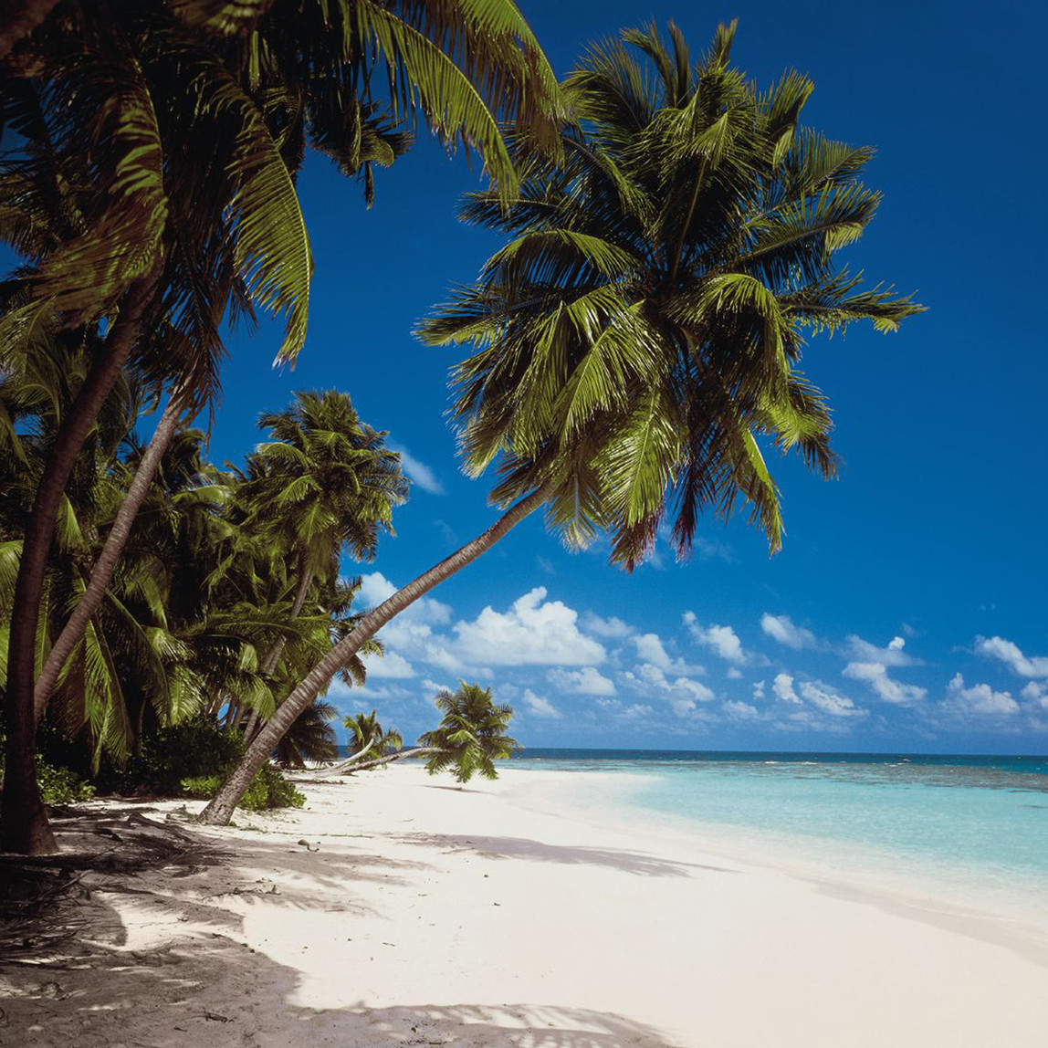 Maldivler 8 Parça Duvar Resmi