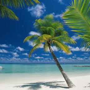 Ari Atoll 4 Parça Duvar Resmi