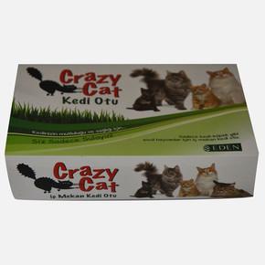 Crazy Cat - Kedi otu