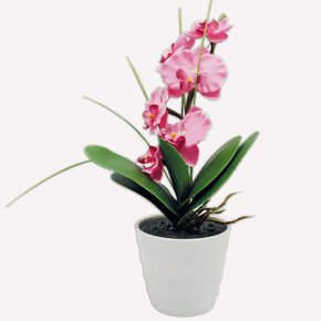 Led'li Fuşya Orkide Beyaz Saksılı