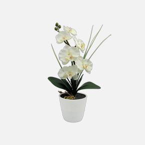 Led'li Beyaz Orkide Beyaz Saksılı