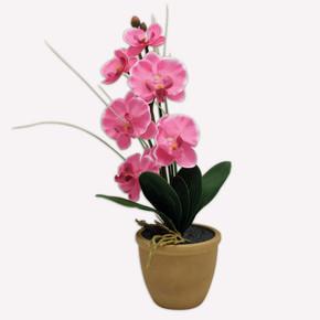 Led'li Fuşya Orkide Kahve Saksılı