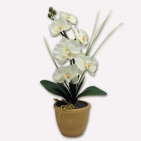 Led'li Beyaz Orkide Kahve Saksılı