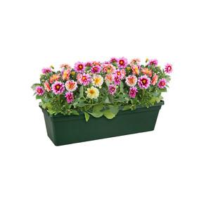 Balkon Saksısı Yaprak Yeşili Green Basics
