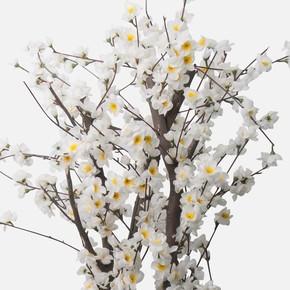 Bahar Ağacı