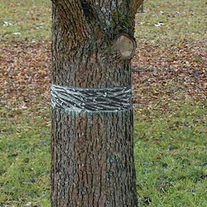 Swissinno Ağaç Bandı