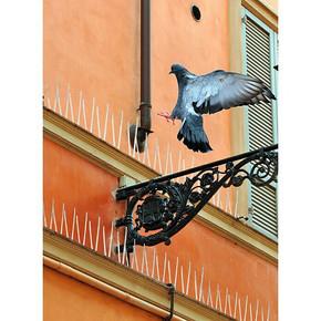 Swissinno Kuş Tuzağı