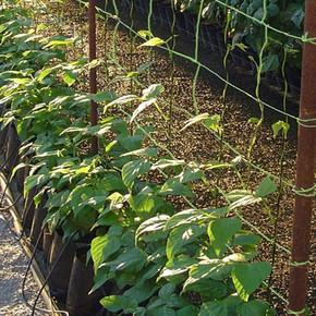 Vilmorin Bitki Yetiştirme Ağı