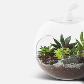 Teraryum Küçük Cam Saksısı Elma 19cm