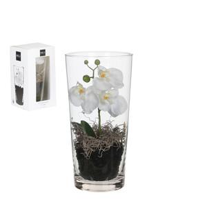 Cam Vazo İçerisinde Beyaz Orkide