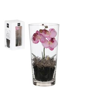 Cam Vazo İçerisinde Pembe Orkide