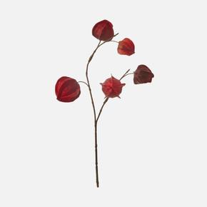 Dal Çiçek