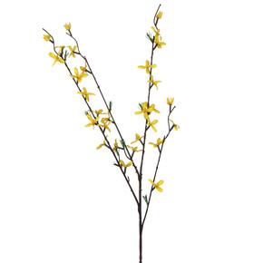 Dal Çiçek Forsythia
