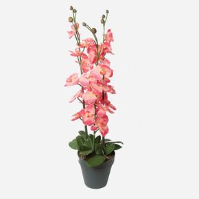 Jumbo Yapay Orkide