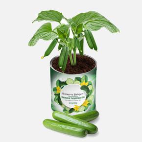 Konserve Bahçem Salatalık Fide Yetiştirme Kiti