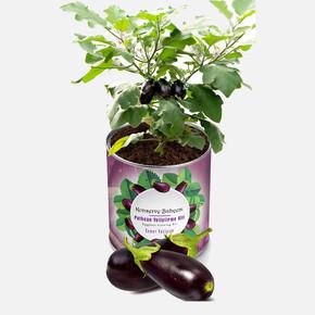 Konserve Bahçem Patlıcan Fide Yetiştirme Kiti