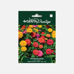 Genta Prestige Kirli Hanım Çiçeği Tohumu