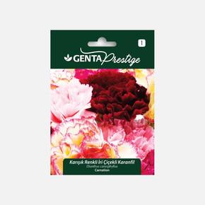 Genta Prestige Karışık Renkli İri Çiçekli Karanfil Tohumu